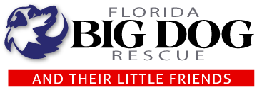 Florida Big Dog Rescue