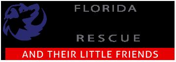 Florida Big Dog Rescue